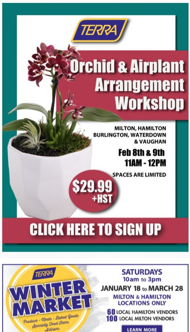 Coupon for: TERRA Greenhouses - Orchid & Airplant Workshop - THIS WEEKEND